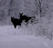 Cow and Calf Moose by MaeBelle