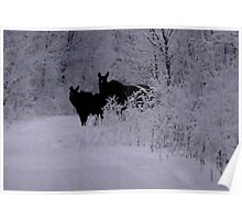 Cow and Calf Moose Poster