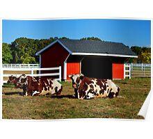 Jersey Livestock Poster