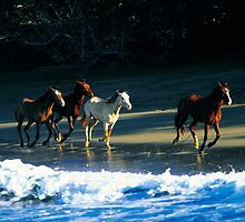 DOMINICAN CABALLOS - Dominican Republic by Anthony Ghiglia