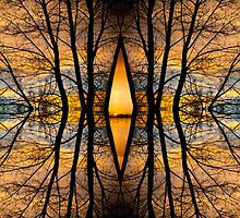 Looking Through The Trees Abstract Fine Art by Bo Insogna