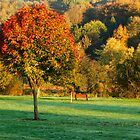 Autumnal by MacsfieldImages