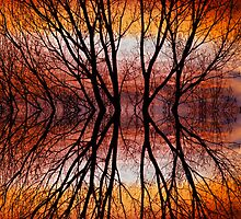 Sunset Tree Silhouette Abstract 2 by Bo Insogna