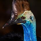 Southern Cassowary (genus Casuarius) by Chris Westinghouse
