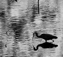 Wading Hunter by Sandra Chung