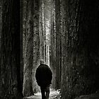Can't See the Forest for the Trees by John Bullen