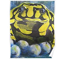 Australian Endangered Corroboree Frog Guarding Eggs Alternate 2 Poster