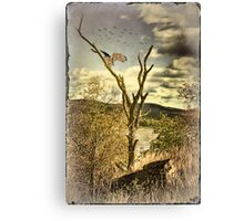Owl's Roost Canvas Print