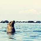 EQUATORIAL MEDITATION - Galapagos Islands, Ecuador by Anthony Ghiglia