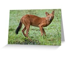 India Wild Dog Greeting Card