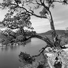 Cider Tree by SuddenJim