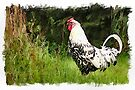 Cock of the walk - watercolour by PhotosByHealy