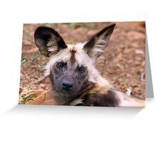 African Painted Dog Greeting Card