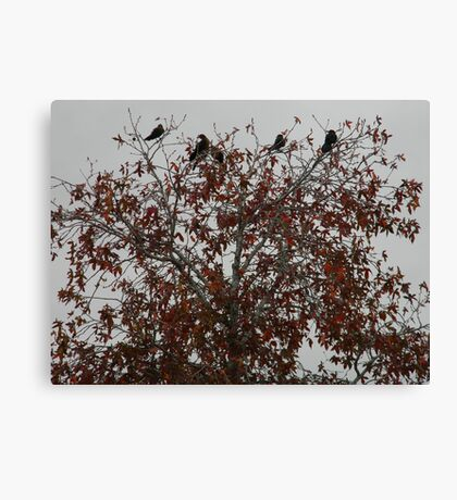 Grackles for a Crown Canvas Print