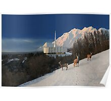 Winter Guests at the Provo Temple 20x30 Poster