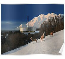 Winter Guests at the Provo Temple 20x24 Poster