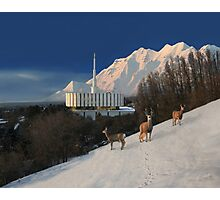 Winter Guests at the Provo Temple 20x24 Photographic Print