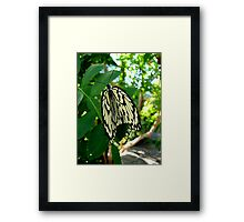 Folding your Wings Framed Print