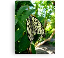 Folding your Wings Canvas Print