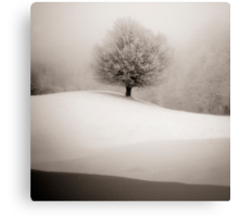 winter degradee Canvas Print