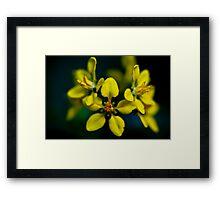 Beautiful Yellow Blur Framed Print