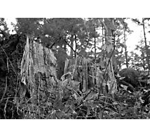 after life Photographic Print