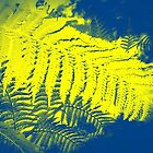 Yellow Fern   by EdsMum