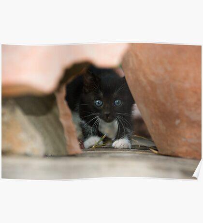 Kitten at Dalyan Poster