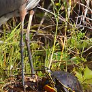 """I wish I was Taller"" - Turtle Vs. Great Blue Heron by naturalnomad"