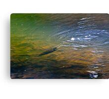 Platypus Down Canvas Print