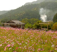 Wildflowers, Ohara, Kyoto, Japan by johnrf