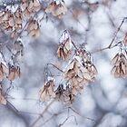 Winter Flowers by Marilyn Cornwell