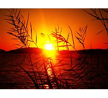 Sunset behind leaves - Round Valley, NJ Photographic Print