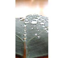Morning Droplets - Lake Eildon Photographic Print