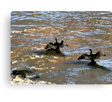 Cormorants drying their wings in Boulogne, France Canvas Print
