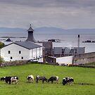 Islay: Ardbeg Distillery by Kasia-D