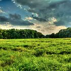 Field near Grabow in Lower Saxony by Hilthart Krogh Pedersen