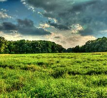 Field near Grabow in Lower Saxony by Hilthart Pedersen