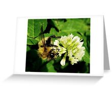 The Hungry Bumble Bee Greeting Card
