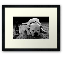 Dog Beer Framed Print