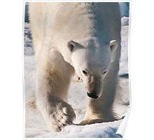Polar Bear Big Paw, Big Snarl Poster