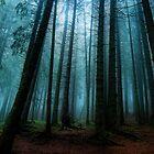 Forest by kumari