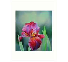 Hot Coal Iris Art Print