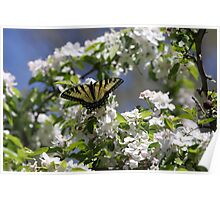 Spring day with Tiger Butterfly   Poster