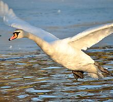 Incoming Flight on Time! by Dorothy Thomson