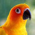 I Might Be Up To Mischief! - Sun Conure NZ by AndreaEL