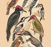 Woodpeckers and Others by Eric Kempson