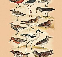 Sandpipers, Snipes and others by Eric Kempson