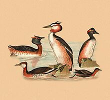 Grebes by Eric Kempson