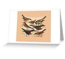 Small Birds Greeting Card